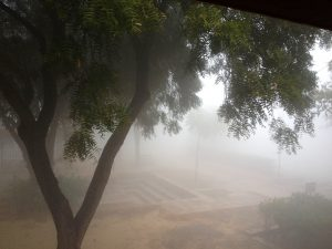 Sanskriti Kendra grounds in the early morning fog