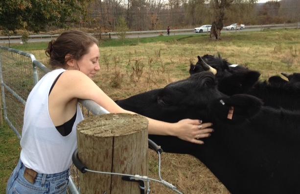 Hampshire Farm TA