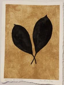 Sanskriti Leaves: Cestrum Nocturnum