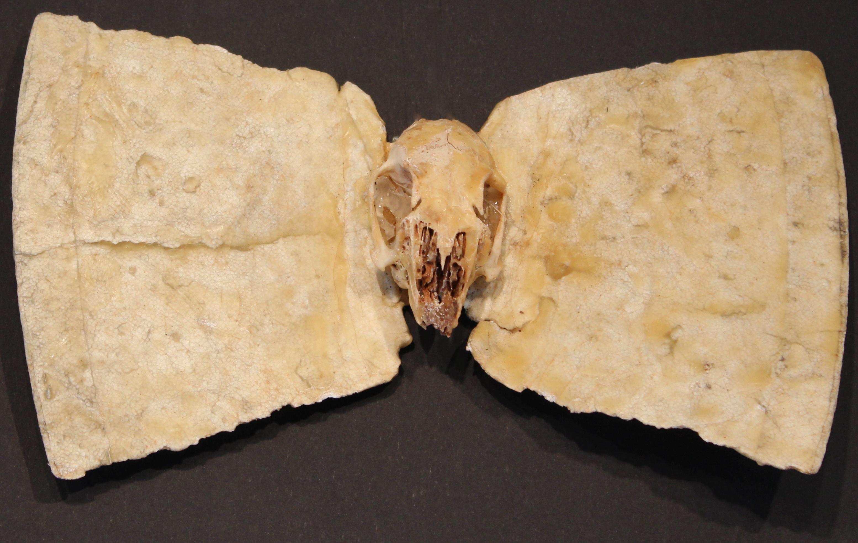 Suttee Skull